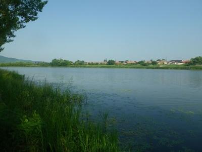 Világszinten is különösen ritka algafaj jelent meg a hazai vizekben