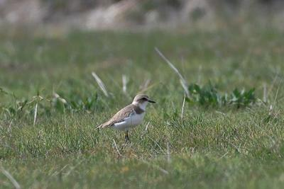 Tíz pár sem fészkel hazánkban a most megfigyelt madárból