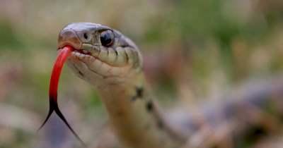 Mérges kígyó kúszott a horgász csónakjába, nem volt hová menekülni