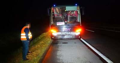 Két vaddisznót ütöttek el az M5-ös autópályán, Kiskunfélegyházánál