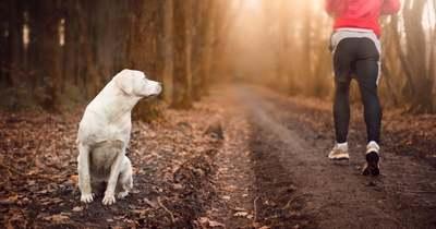 Van ilyen is: kutyakerülő út
