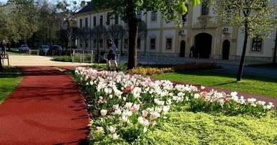 Virágba borult Mohács számos utcája és tere