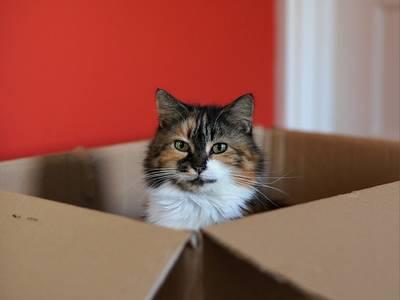 A macskák a nem létező áldobozokba is szívesen beülnek