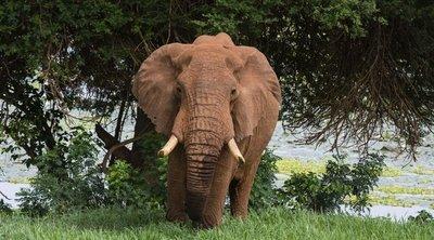 Elpusztult egy elefántcsorda Indiában: szörnyű, mi okozta a halálukat