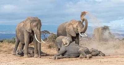 Egy újabb sorscsapás érte Indiát, villámcsapás végzett egy elefánt csordával