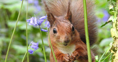 Ezt látni kell, ez a mókus mindent bevet az ételért – Fotó!