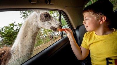 Elüldözte Szada település a népszerű Szafari Parkot – de mi lesz a 100 állattal?