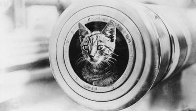 Harcias hadimacskák különleges kalandjai a második világháborúban