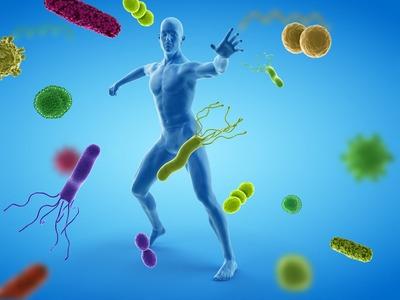 Fontos felfedezést tettek magyar kutatók az immunrendszerrel kapcsolatban
