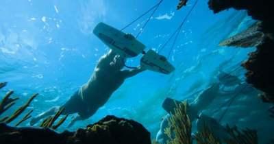 Úgy siklunk a víz alatt, mint a delfinek