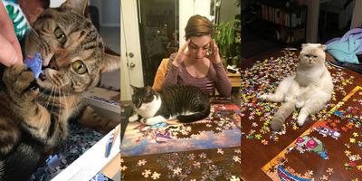 Így segíthet a cicád egy puzzle kép kirakásában - Galéria