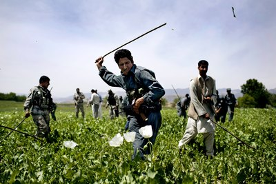 Így akarták megszabadítani Afganisztánt a máktermesztéstől - galéria