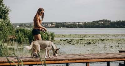 Te magaddal viszed túrázni a kutyádat?