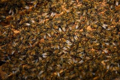 Profi tolvajok lopják a méheket Franciaországban