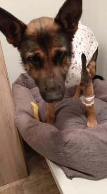 Nagy öröm: újjászületett a felakasztott gödöllői kutya