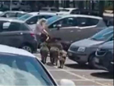 Vaddisznók vették el egy parkolóban egy nő bevásárlószatyrát - videó