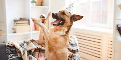 Öt dolog, amit tudnod kell, ha lakásban tartasz állatot