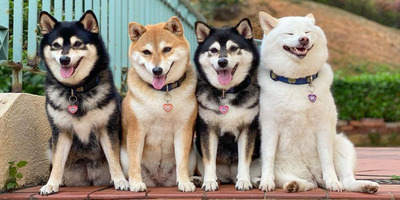 A nap legcukibb trollja: a kutya, aki minden fotót elront