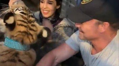 Becsináltak a helyiek: hatalmas tigris sétálgatott a kertek alatt – videó