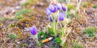 A cigarettázás a környezetünket is károsítja