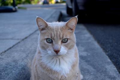 Ezer kóbor macskát engednek ki a patkányfővárosnak csúfolt nagyváros utcáira