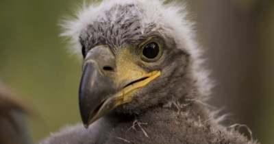 20 fiókát találtak a Balatonnál ebből az 1 millió forint értékű madárból