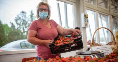 Egyre több az árus és a vásárló a tavaly novemberben megnyílt letenyei termelői piacon