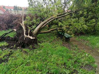 Tornádó csavart ki fákat és szakított le garázstetőket Orosházán - képek