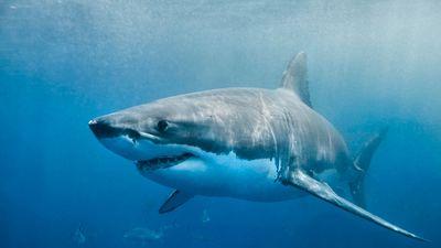 Cápatámadásban halt meg egy szörföző Ausztráliában