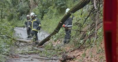 Kidőlt fákhoz riasztották Tamási önkormányzati tűzoltóit