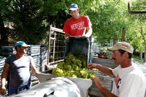 Az Irsai Olivérrel már a hétvégén végeznek
