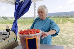 Megérett az eper: dúl az eperszezon a szőlősi határban
