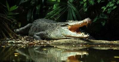Rémisztő! A túravezető szándékosan vezethette a krokodilok közé az ikreket és barátaikat