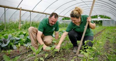 A demjéni házaspár biokertjéből házhoz érkezik a vegyszermentes zöldség