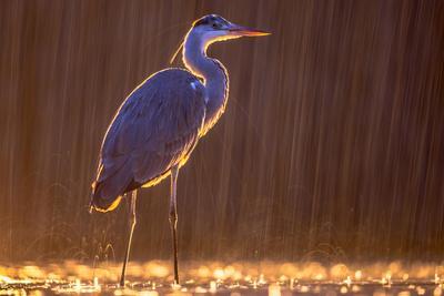 Hamarosan hajtánnyal indulhatunk madármegfigyelésre a Kiskunságban