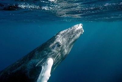 Hihetetlen: 40 másodpercig volt a bálna szájában a halász - Videó