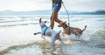 Kutyameleg lesz a nyáron – Így óvjuk meg kedvenceinket, hogy ne történjen baj