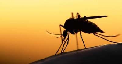 Szolnokon és a Tisza-tónál is irtják a szúnyogokat