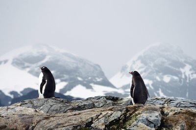 Mégsem az oroszok fedezték fel az Antarktiszt?