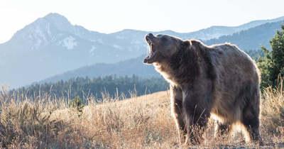 Medve ölt embert Szlovákiában