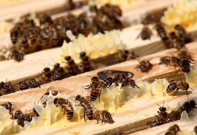 Technológiai cégek mentenék meg a méheket