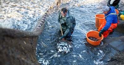 Uniós oltalom alá került a balatoni hal