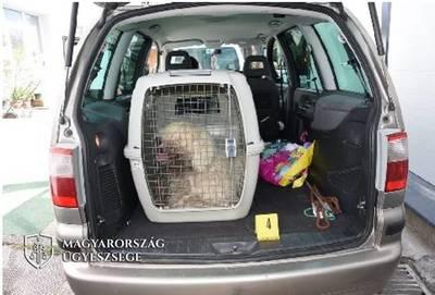 Agresszív kutyavédők támadtak rá egy kétgyerekes apára Veszprém mellett