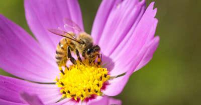 A beporzó rovarok fontosságára hívják föl a figyelmet