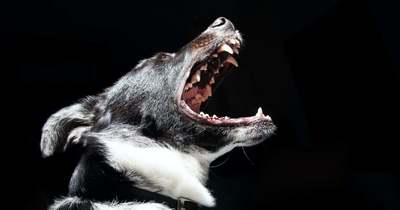 Mi a teendő, ha a szomszéd kutyája egyfolytában ugat?