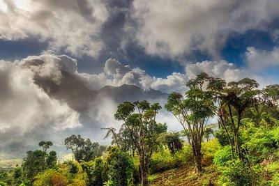 Ötmillió fát ültettek el a ghánaiak egy nap alatt a zöld nemzeti ünnepen