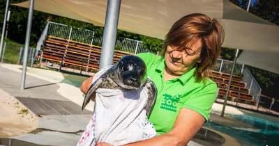 Fókabébi született a Veszprémi Állatkertben