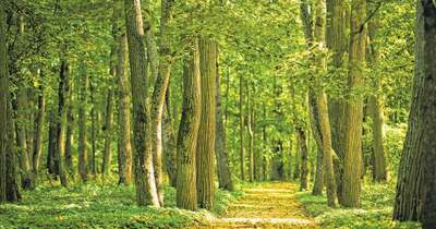 Az erdők segítenek az aszály ellen