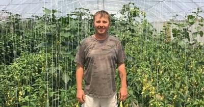 Rovarokkal védik a növényeket az uszódi gazdaságban