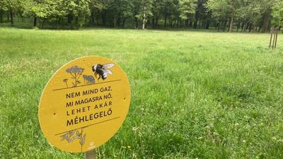 A főépítész nem csak méheket, juhokat is legeltetne Budapesten
